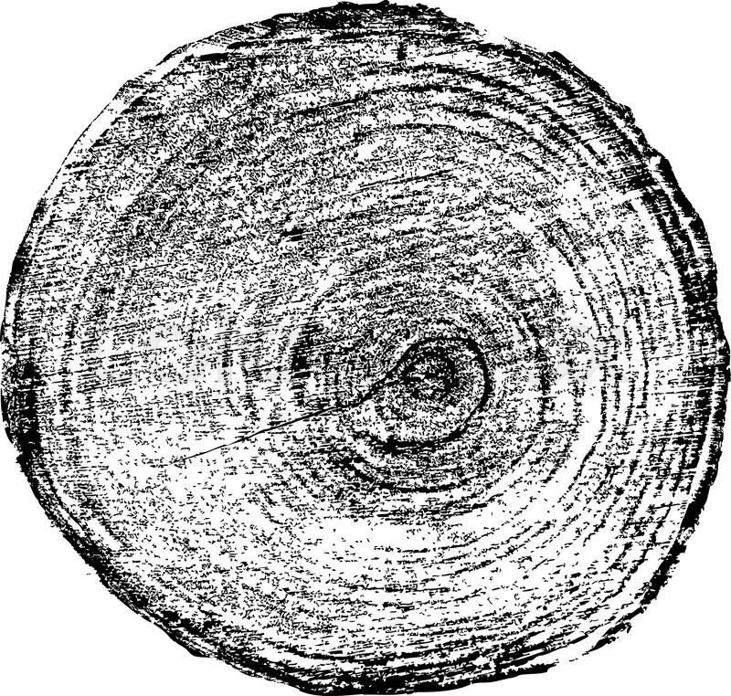 800x762 Tree Rings Saw Cut Tree Trunk Background. Vector Illustration