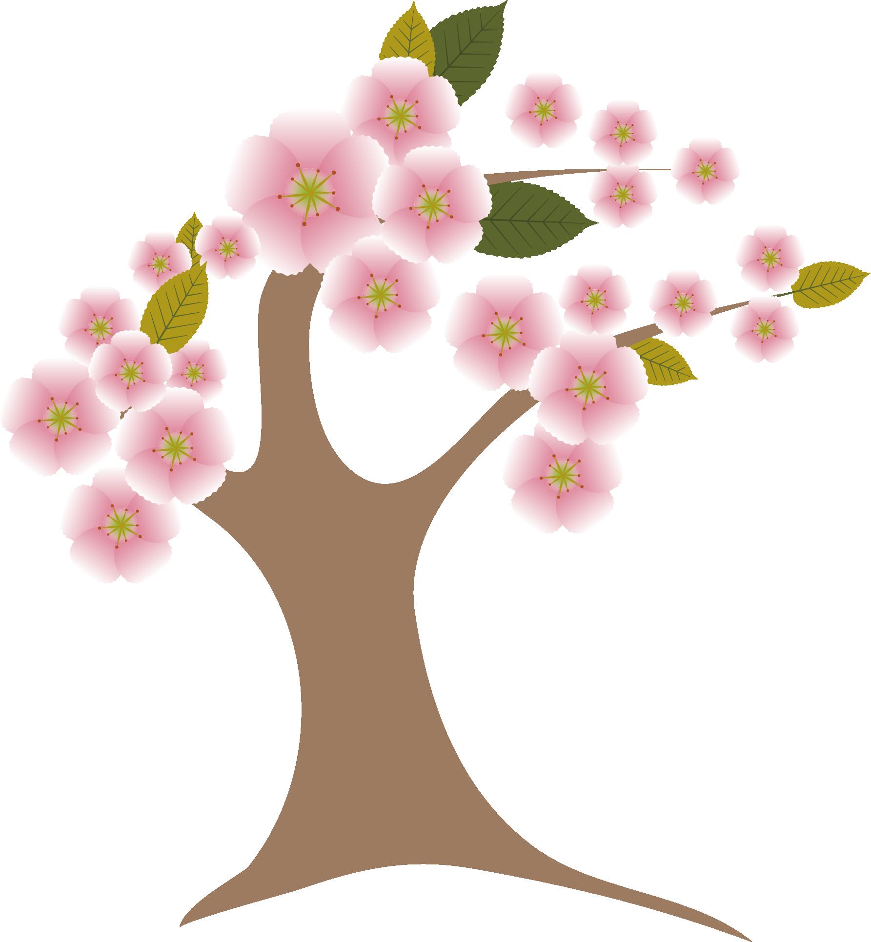 1785x1931 Cherry Blossom Tree Trunk