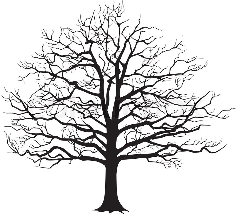 800x728 Black Silhouette Of A Bare Tree . Vector Illustration Stock