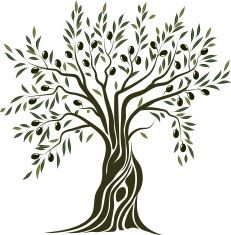 231x235 Olive Tree Vector Art Illustration Teaching And Learning