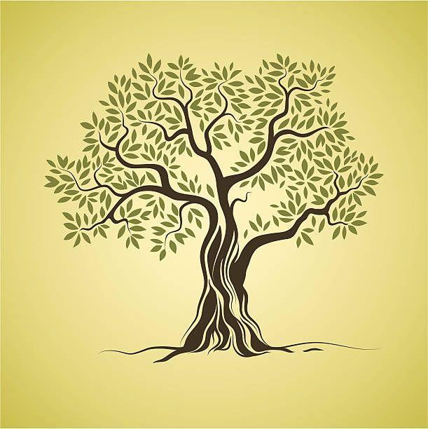 611x612 Olive Tree Vector Art Illustration Tattoo Vector