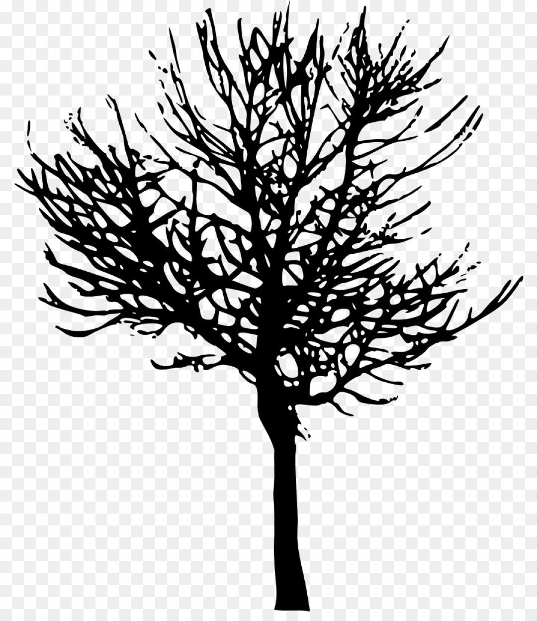 1080x1248 Png Tree Branch Desktop Wallpaper Clip Art Tree Vector Orangiausa