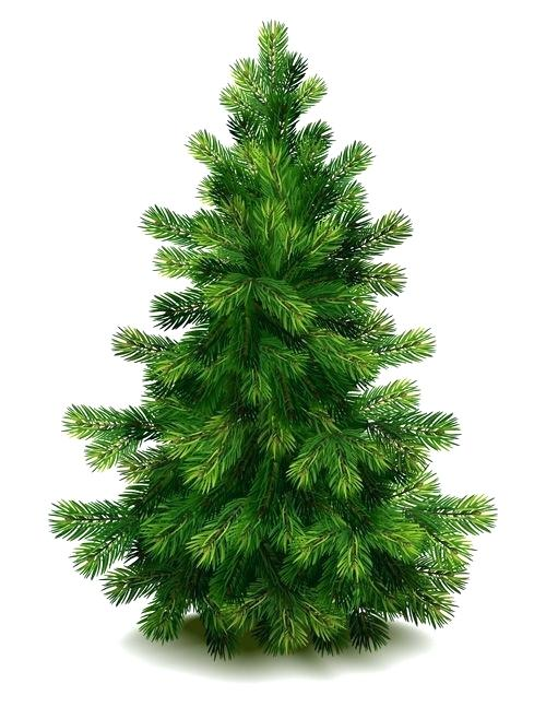 500x647 Clip Art Free Christmas Tree Clip Art Tree Green Fir Tree Vector