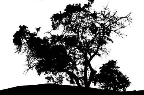 Tree Vector Black