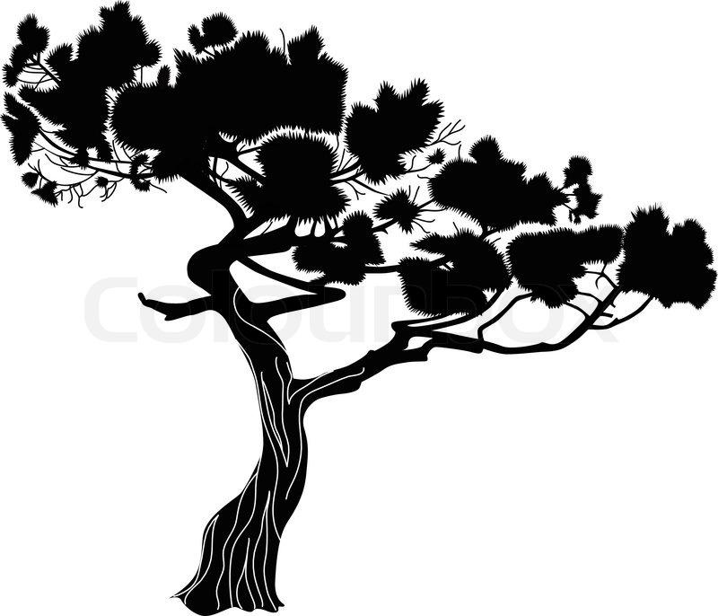 800x686 Fur Tree A Fir A Pine Trees Stock Vector Colourbox