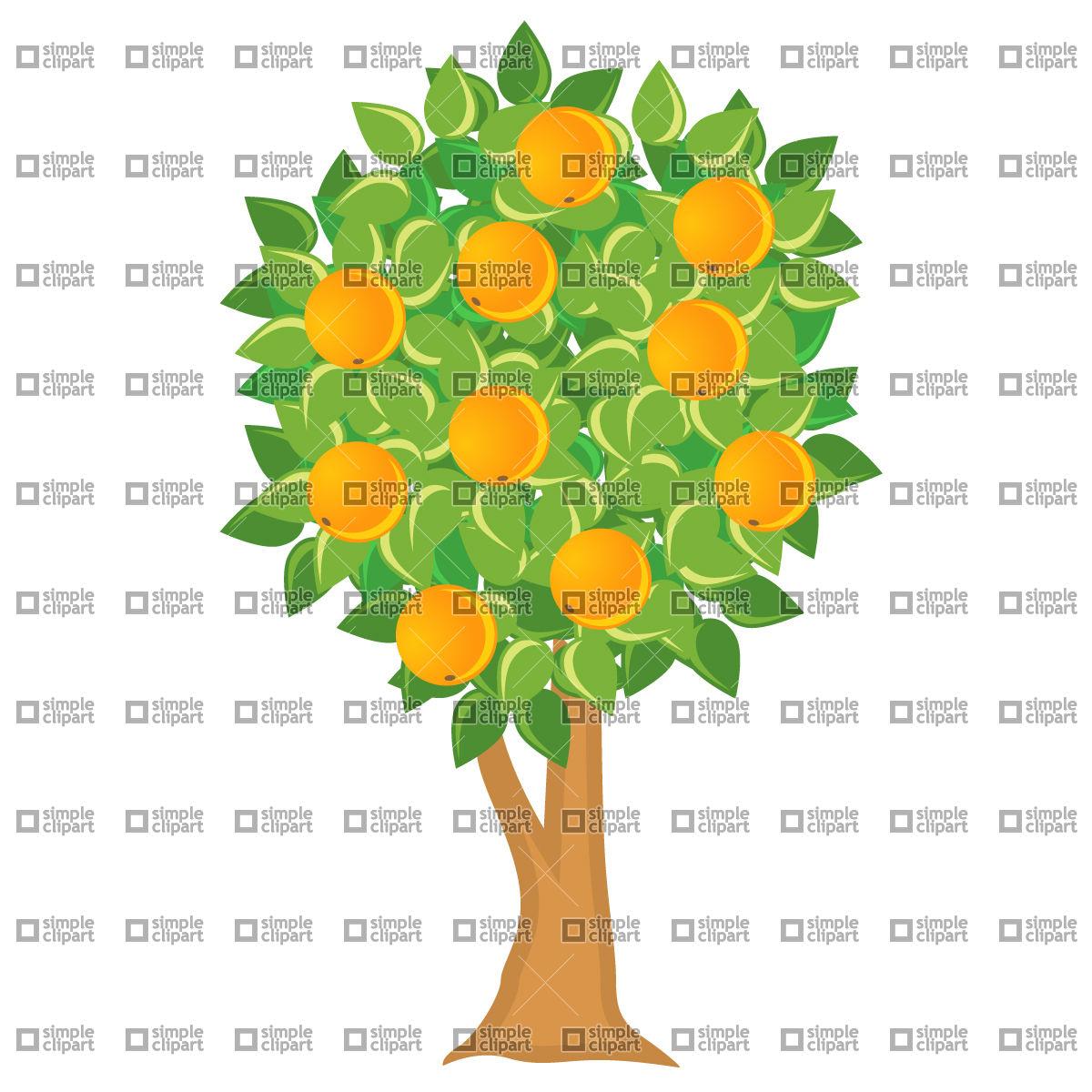 1200x1200 Orange Tree Vector Image