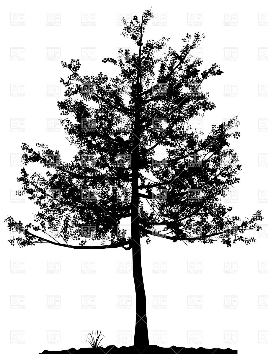 908x1200 Silhouette Of Deciduous Tree Vector Image Vector Artwork Of