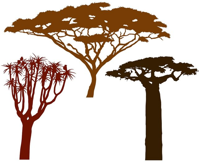 642x525 African Trees Vector File For Home Wall Decals Etsy
