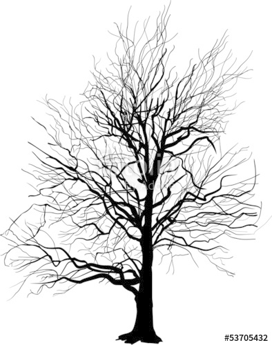394x500 Bare Tree Silhouette Isolated On White Stock Image And Royalty