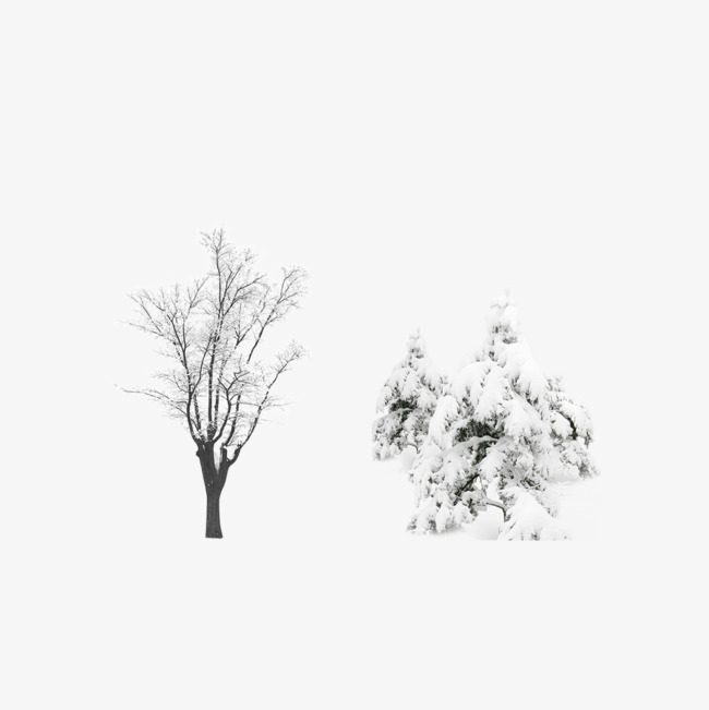 650x651 After The Snow Tree Vector Source File, Snow, Trees, Plant Png And