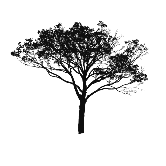 640x640 Tree Vector Black And White, Tree Vector Clipart, Tree Clipart