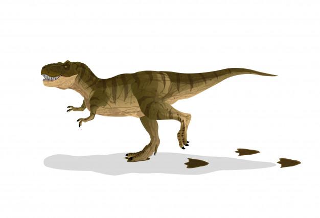 626x427 Dinosaur Cartoon Tyrannosaurus T Rex Walked With Footprints