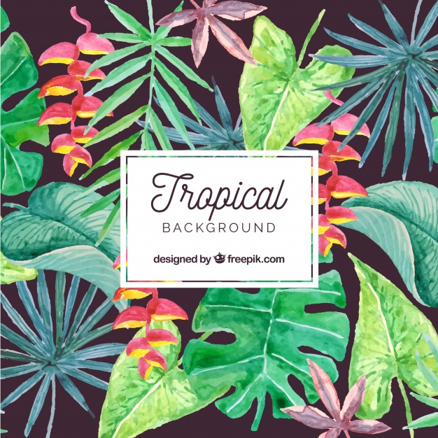 626x626 Lovely Watercolor Tropical Background Vector Free Download