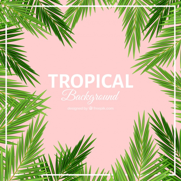 626x626 Palm Leaves Tropical Background Vector Free Download