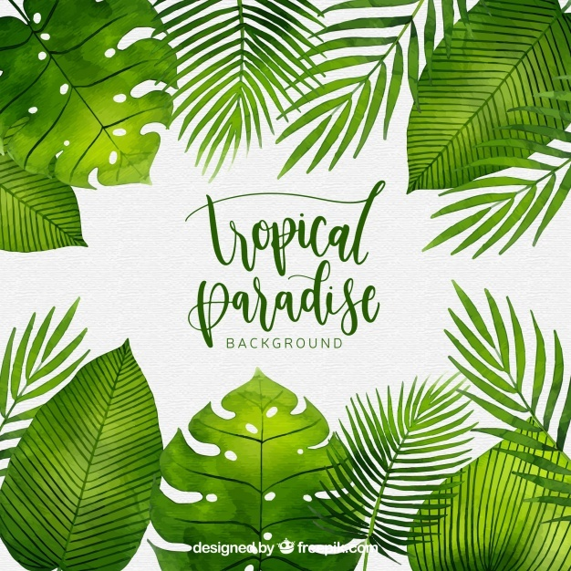 626x626 Tropical Leaves Vectors, Photos And Psd Files Free Download