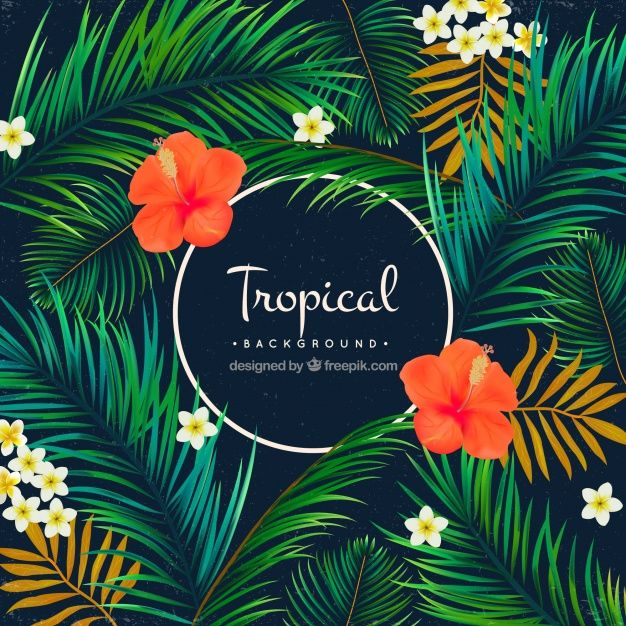 626x626 Tropical Background Of Palm Trees And Flowers Free Vector