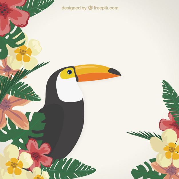 626x626 Tropical Background With A Toucan Vector Free Download