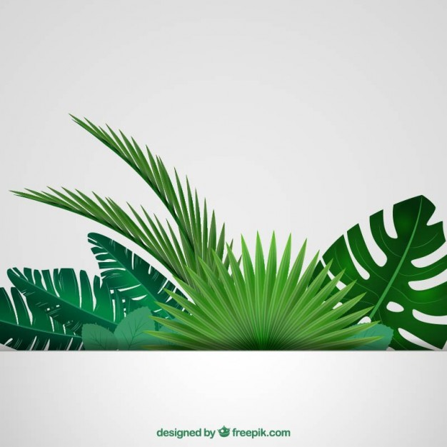 626x626 Tropical Leaves Background Vector Free Download