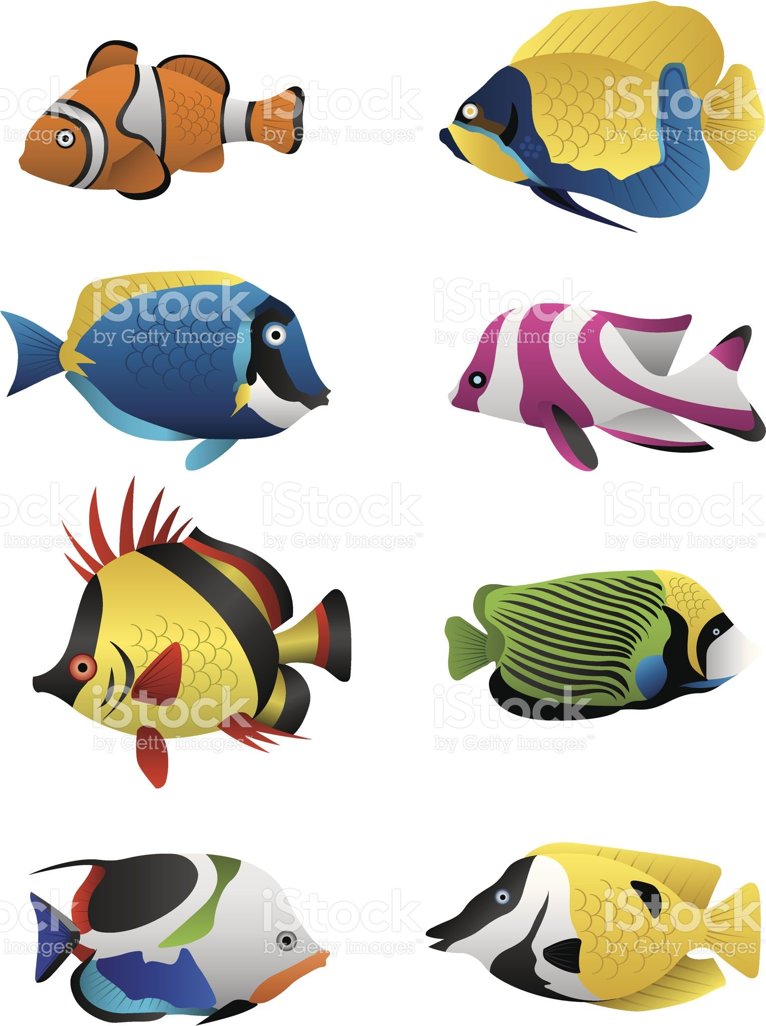 1529x2048 A Colorful Assortment Of Tropical Fish Illustrated In Vector