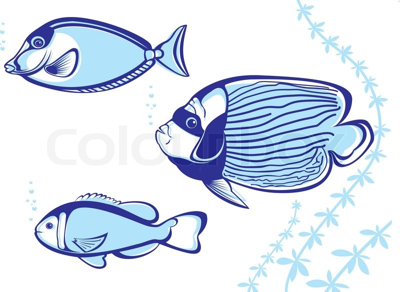800x584 Tropical Fish Vector Illustration On White Background For Design