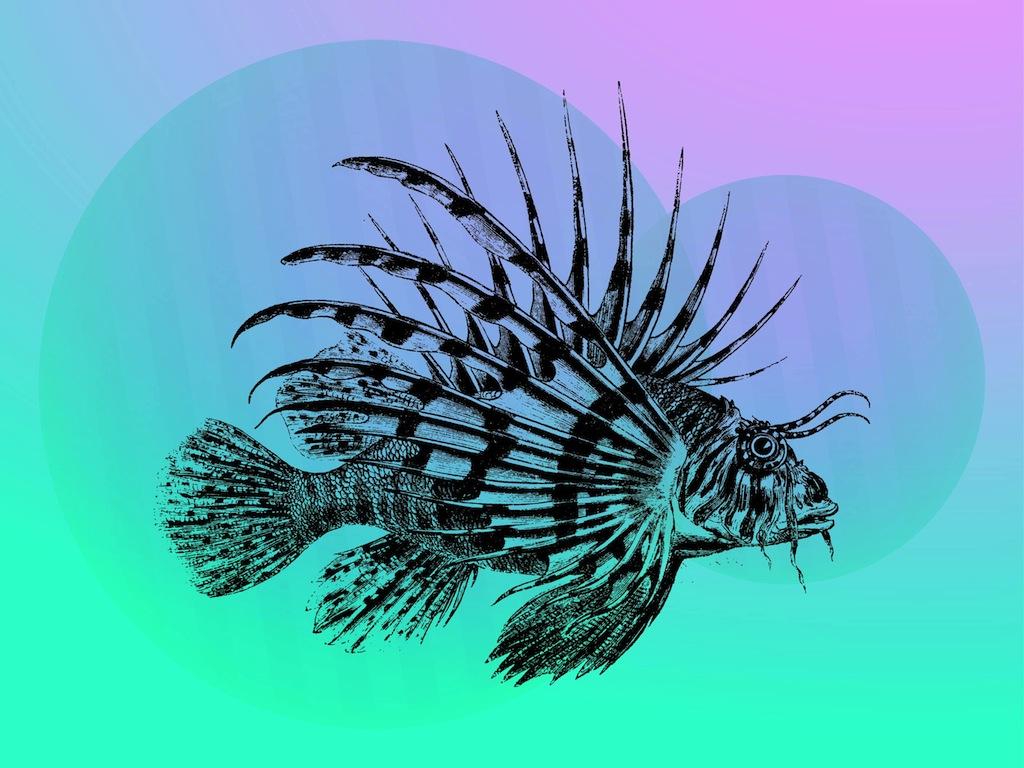 1024x768 Tropical Fish Vector