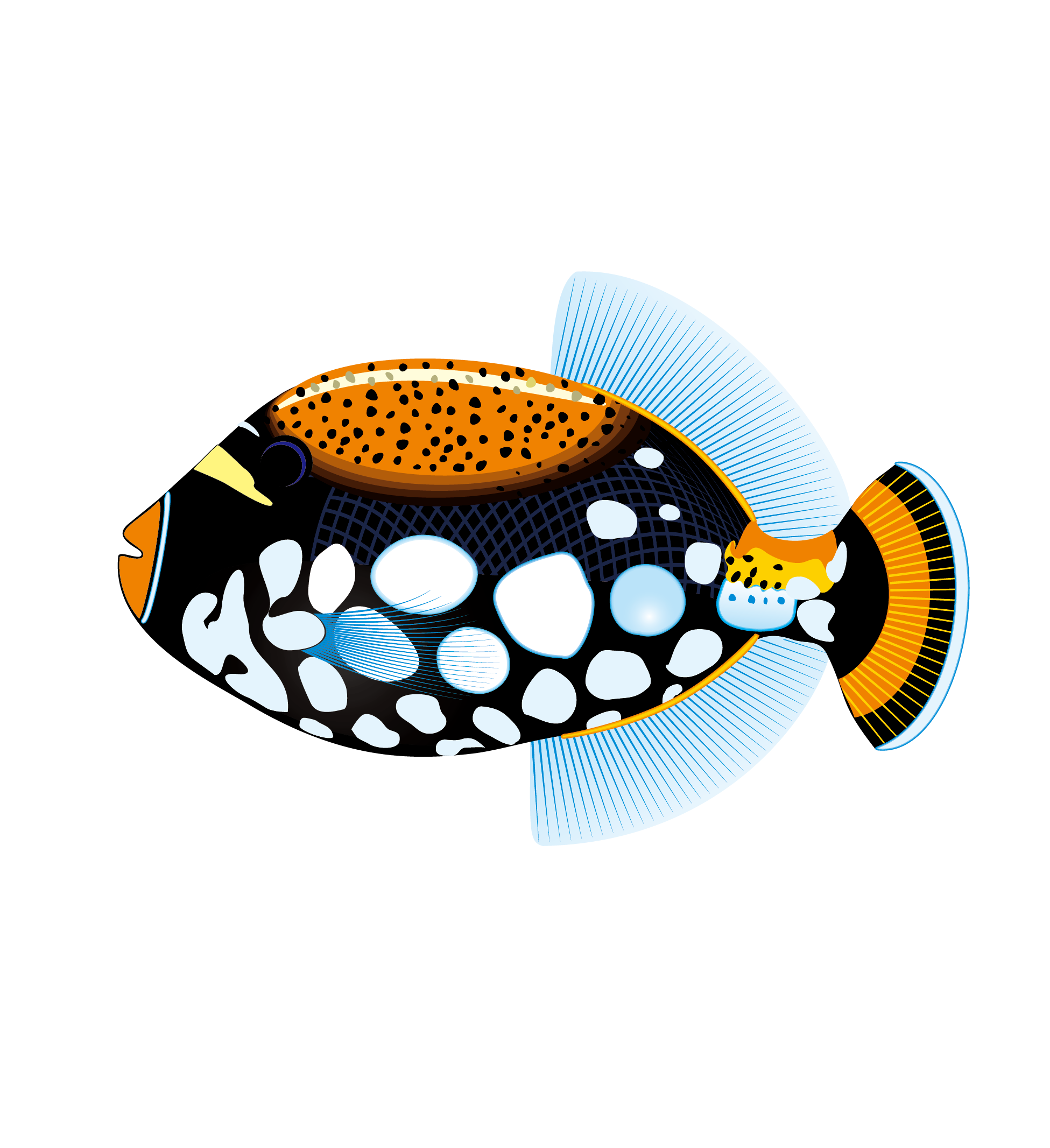 1951x2133 Tropical Fish Saltwater Fish Clip Art