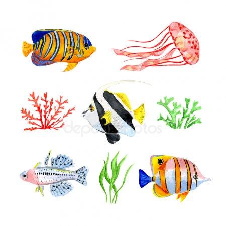 450x450 Tropical Fish Vector Tropical Fish Stock Vectors Royalty Free