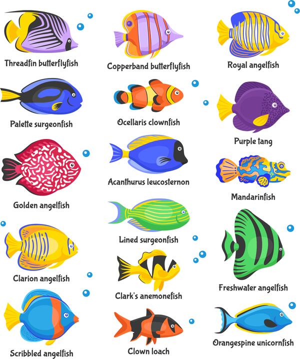 600x718 Beautiful Tropical Fish Vector Set 01 Free Download