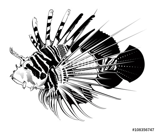500x427 Tropical Fish. Vector Illustration Stock Image And Royalty Free