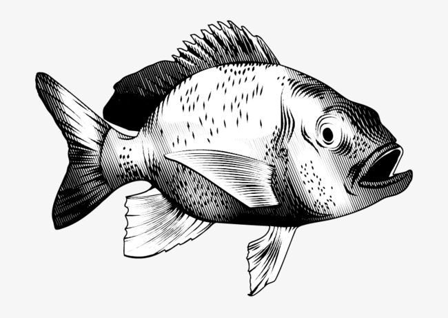 650x461 Vector Black And White Tropical Fish, Black Vector, Fish Vector