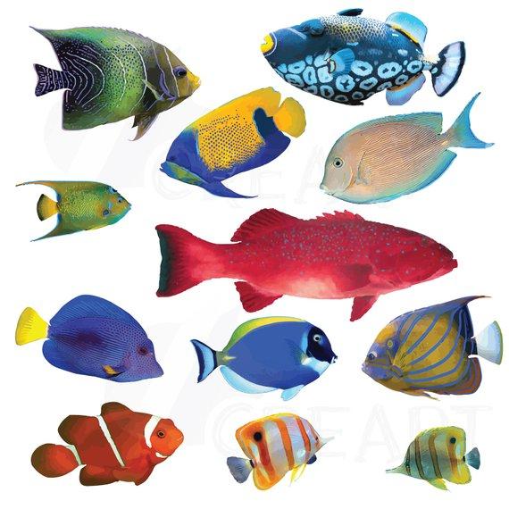 570x570 Watecolor Tropical Fish Clip Art 12 Tropical Fish Vectors Etsy
