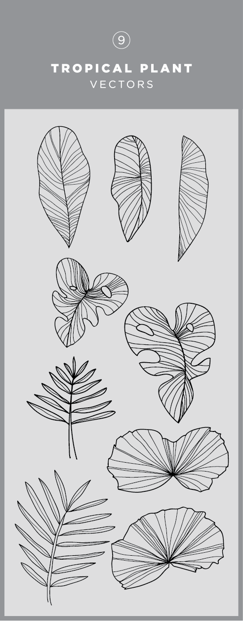 492x1255 Illustrated Tropical Plant Vector Graphic Download In 2018