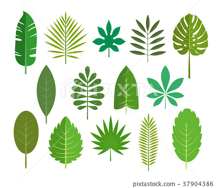 450x388 Set Of Leaves Of Tropical Plants. Vector