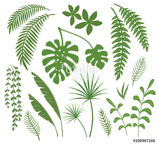 500x460 Set Of Leaves Of Tropical Plants. Vector Illustration. Stock