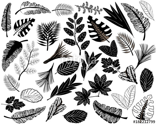 500x400 Black Icons Of Leaves Of Different Plants. Set Of Tropical Leaves