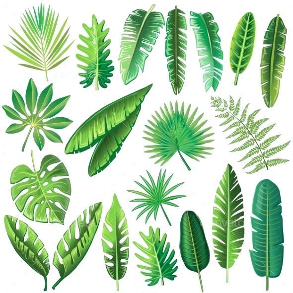 590x590 Tropical Leaf Plant Vector Tropical Leaves Flowers Plants Nature