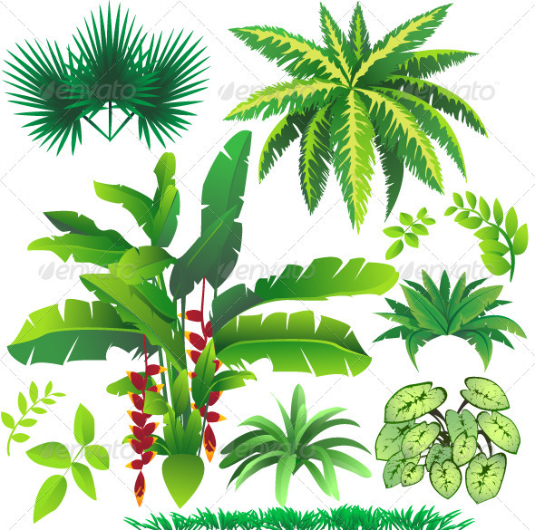 590x585 Tropical Plant Leaves By Airdone Graphicriver