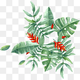260x260 Tropical Plants Png, Vectors, Psd, And Clipart For Free Download