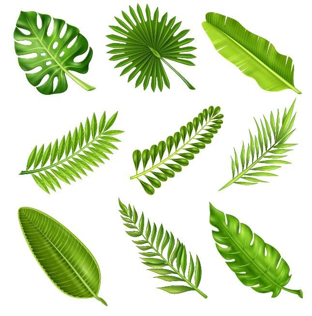 645x653 Tropical Plant Leaves Vector Set 01 Art In 2018
