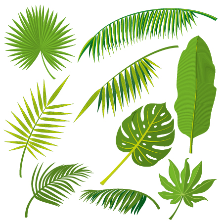 451x451 Tropical Plant Leaves Vector Set 02 Free Download