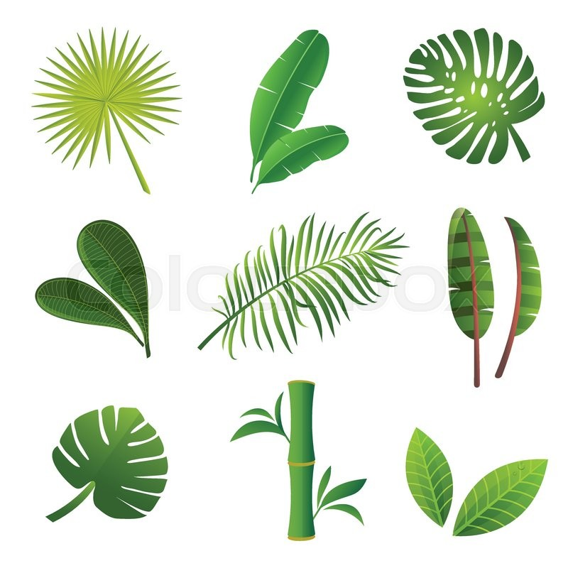 800x800 Tropical Plants Set. Vector Illustration Of Green Leaves Of