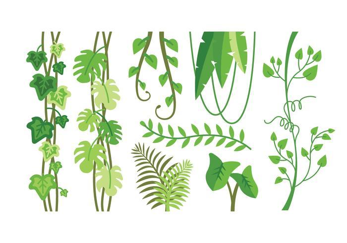 700x490 Tropical Plants Vectors