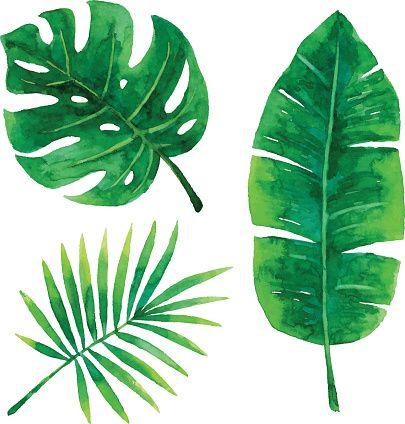 405x424 Vector Illustration Of Tropical Plants Leaf. Ink Me!