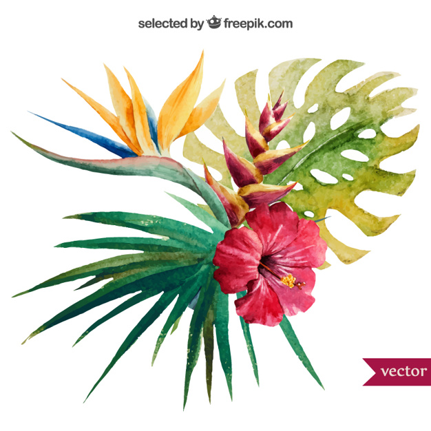 626x626 Watercolor Tropical Plant Vector Free Download