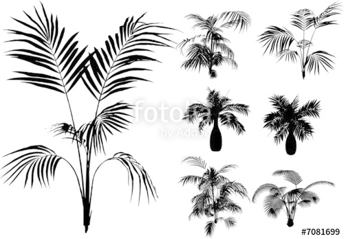 500x348 Bamboo And Other Tropical Plant Vector Stock Image And Royalty