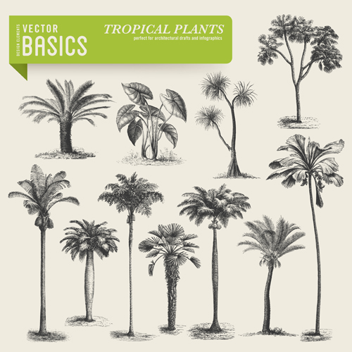500x500 Tropical Plants Vector Ai Format Free Vector Download