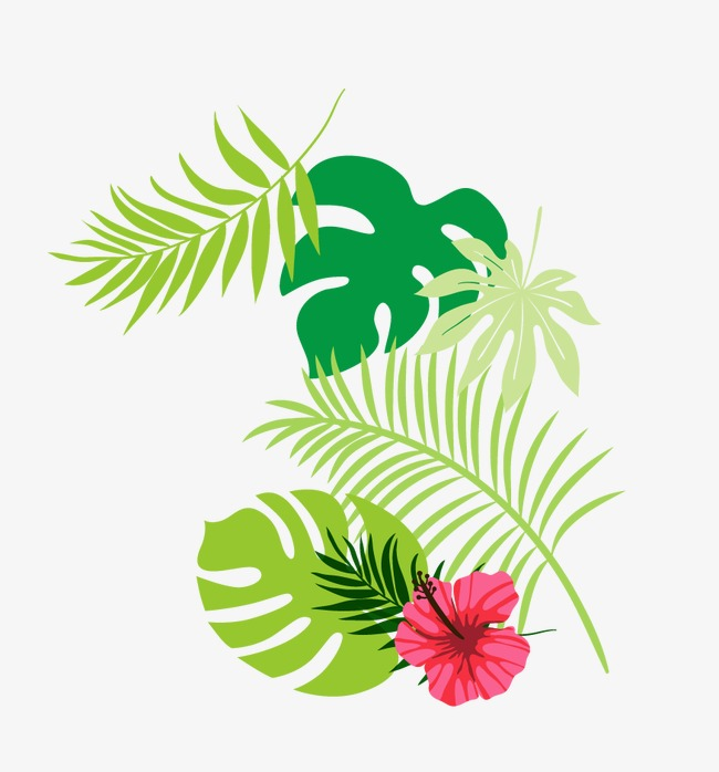 650x698 Great Fresh Tropical Plant Material, Plant Vector, Great, Tropical