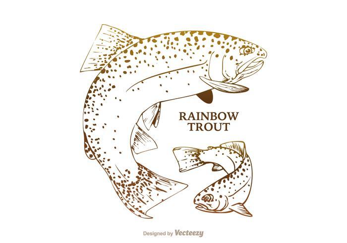 700x490 Free Rainbow Trout Vector Illustration