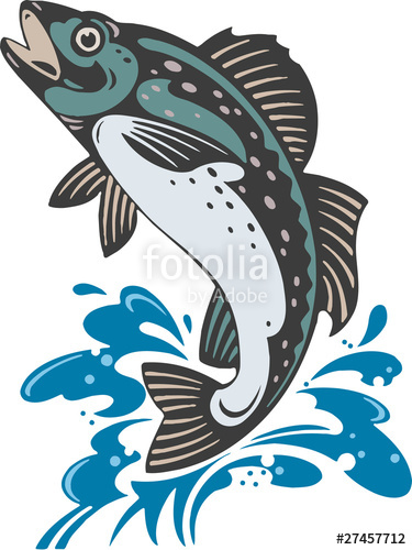 375x500 Jumping Trout Stock Image And Royalty Free Vector Files On