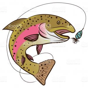 300x300 Rainbow Trout Vector Isolated On A White Background Gm Orangiausa